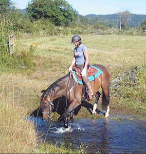 Anne and Diablo the dressage horse crossing water
