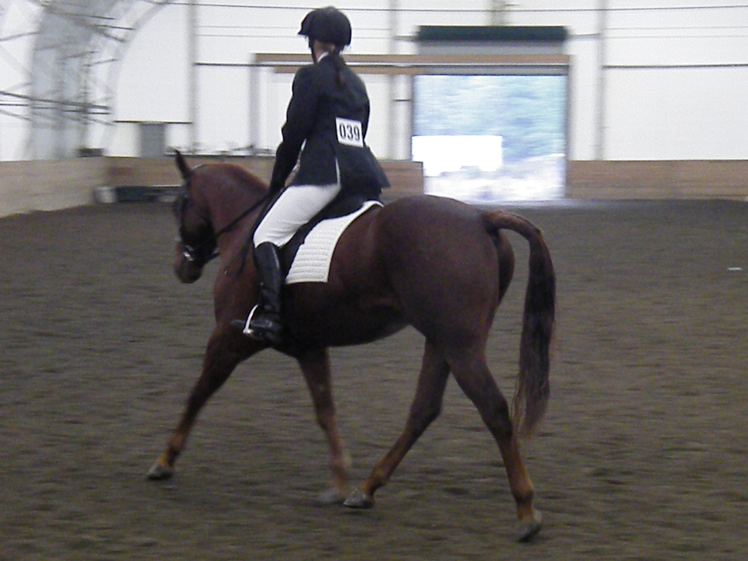 Mariah warming up for Dressage Test at Queen Margarents